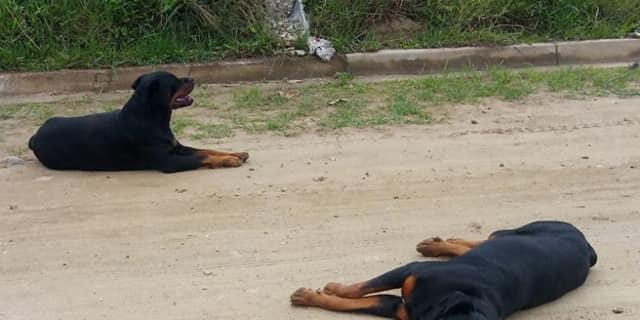 Minutos depois os animais foram levados por uma ONG (Reprodução/Redes sociais)