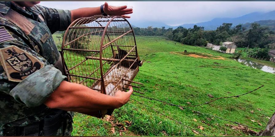 Aves silvestres mantidas ilegalmente em cativeiro são libertas no litoral de SP Subtítulo (Foto: Divulgação Polícia Ambiental)
