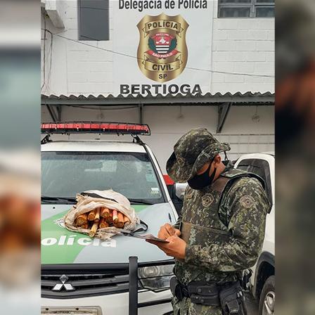 Homem é autuado em mais de R$ 23 mil por exploração de palmito jussara em Bertioga